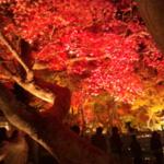 秋のミニ旅行~京都・嵐山 編